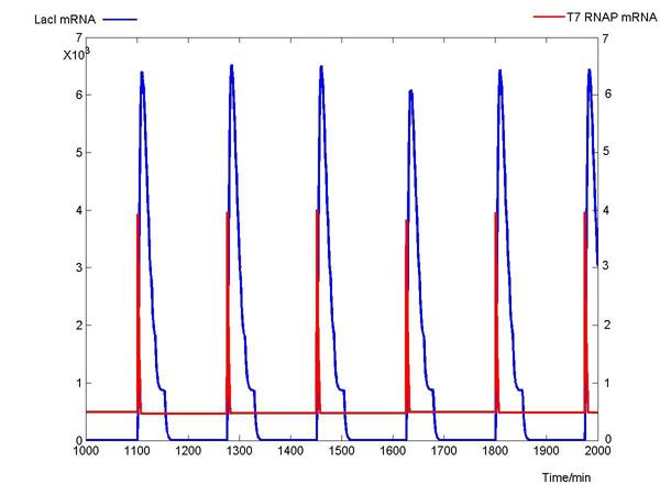 1 T7&LacI mRNA.jpg