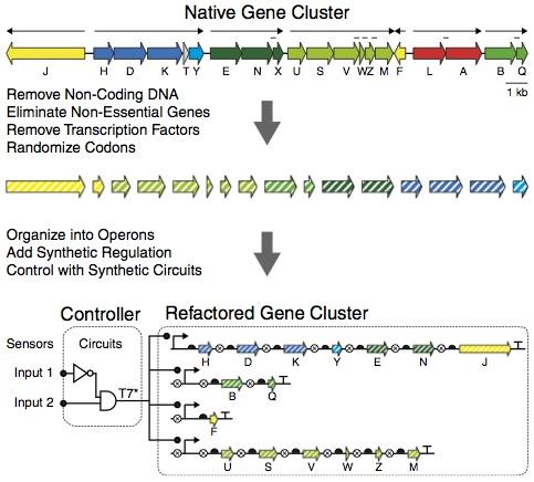 File:Refactoring Gene Clusters.jpg