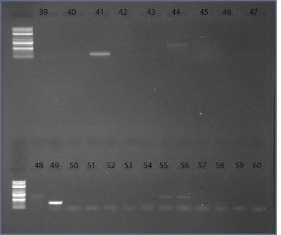 File:09dec09 primer13-18 39-60 text.jpg