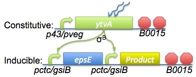 Imperial 2008 Named Circuitry.jpg