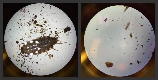 File:Invertebrate samples.jpg