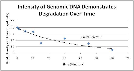 Grp5 gel analysis.jpg