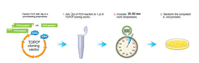 Protocloning2.jpg
