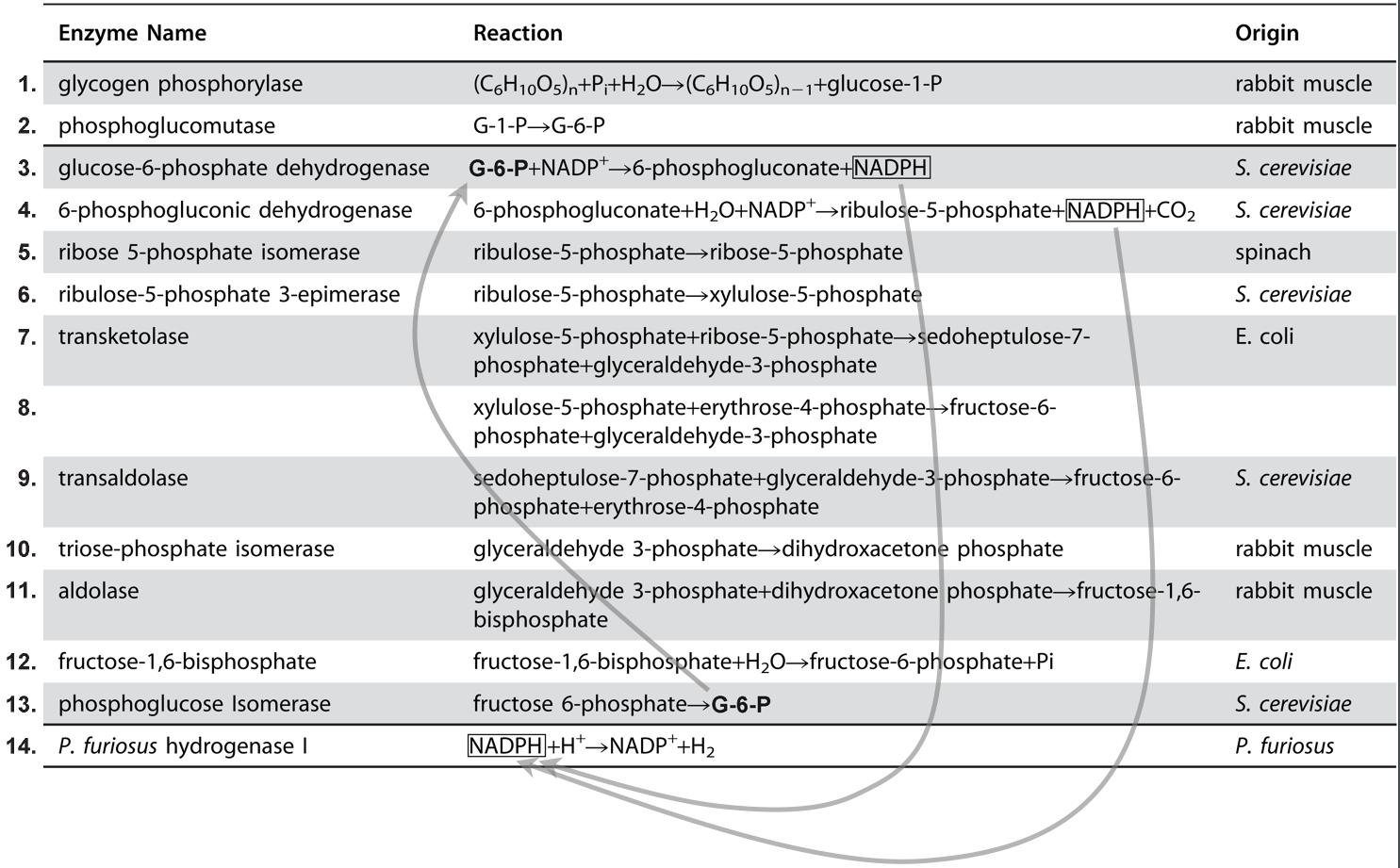 Enzymes6.jpg