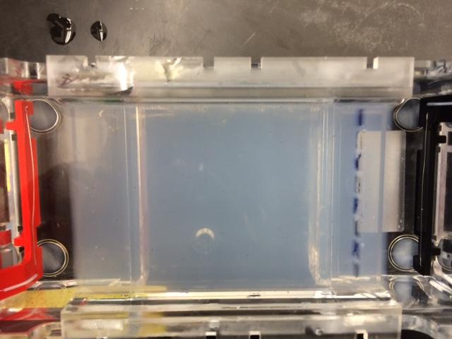 MG Lab 4 Picture 5 (gel electrophoresis).JPG