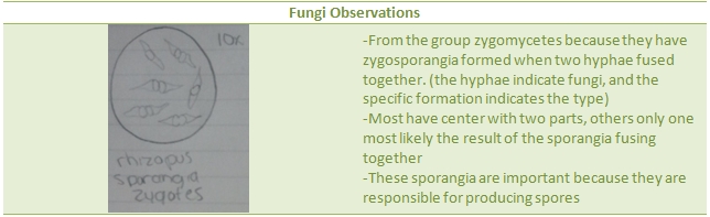 File:Fungi Observations.png