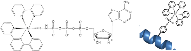 File:Hartings AU Phosphorylation Header.png