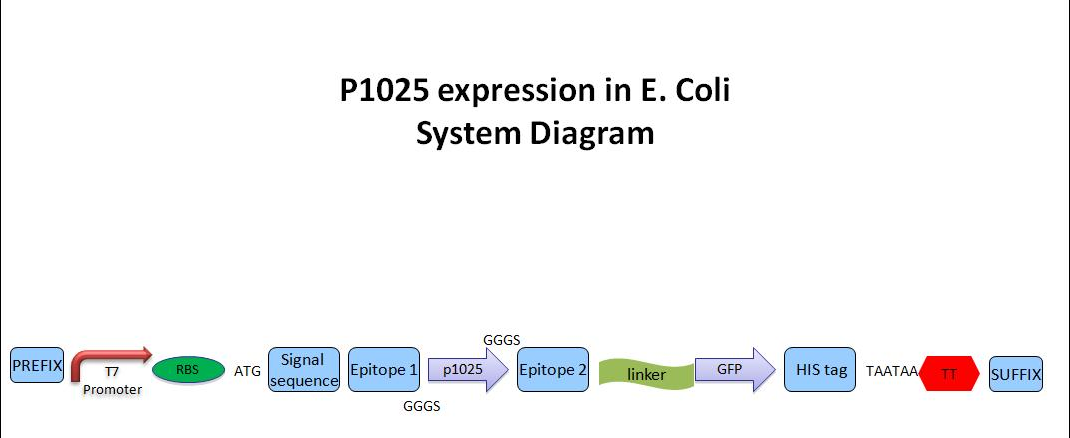 System diagram pic.jpg