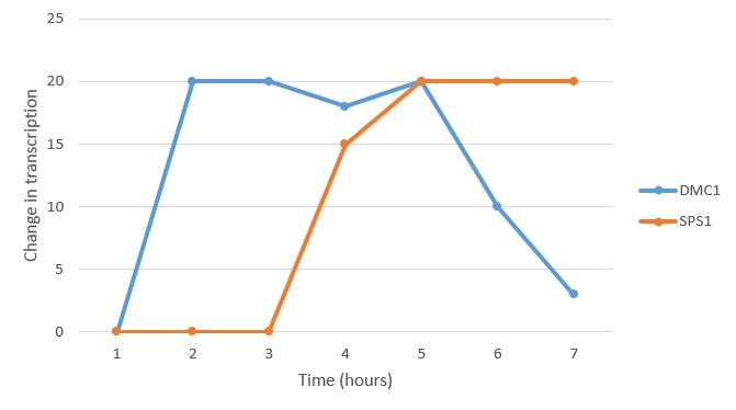DMC1 SPS1 Transcription Rate.png