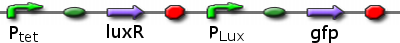 File:ICGEMS sys Ptet luxR Plux gfp.png
