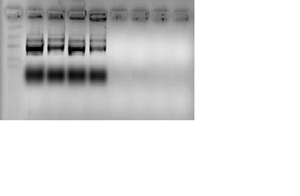 File:Experiment 1-4 etbr.png