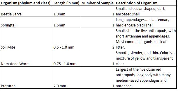 File:Peter Giang - Invertebrate Diagram.png