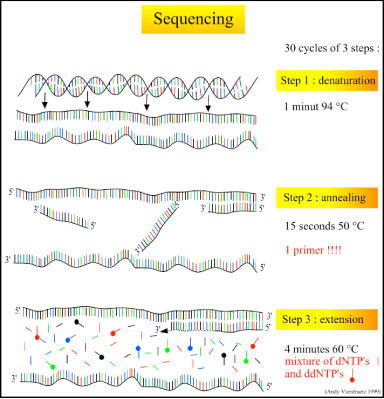 Image:Sequencing steps.jpg