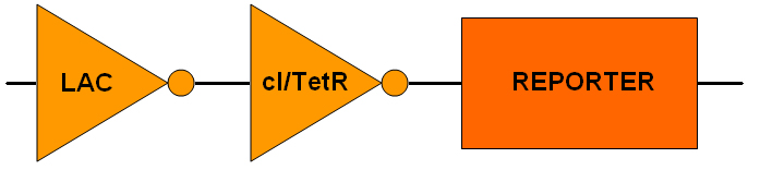 File:IGEM2005DeviceSchematic.jpg