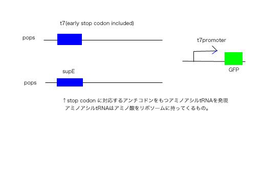 Igem5.jpg