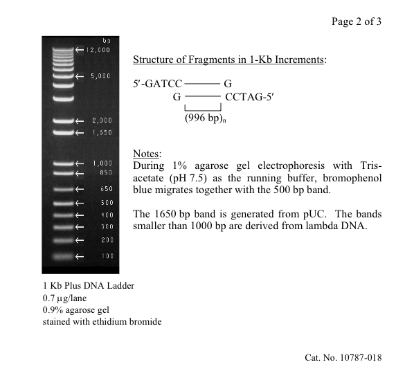 DNA-Ladder-3.png