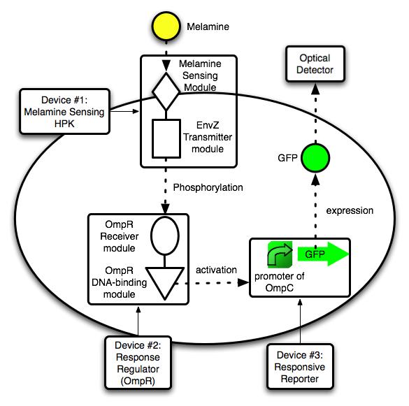 File:Melamine Sensor Model 02.png