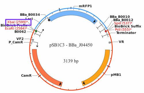 Rsz psb1c3 - bba j04450 4.jpg