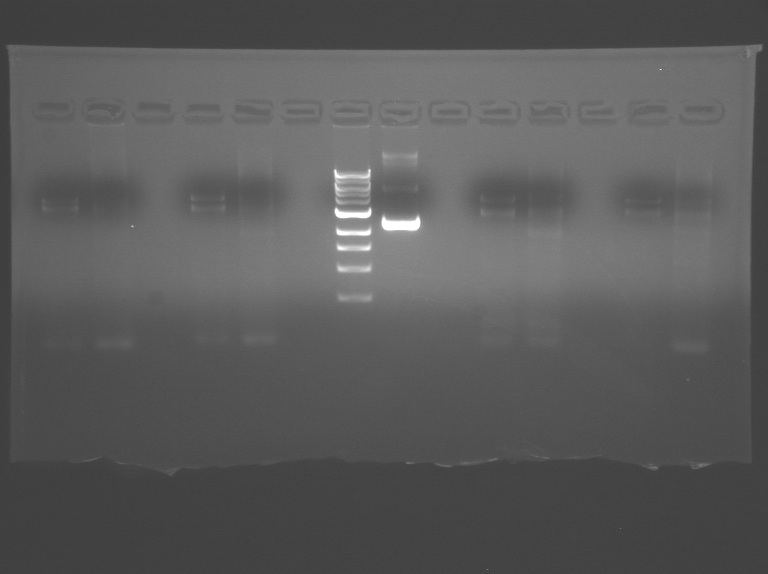 File:S10 M2D3 TR gel-2.jpg