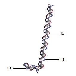 File:B1I1L1-new2.png
