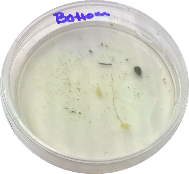 File:Cosette Taggart lab 2 bottom niche.png.png