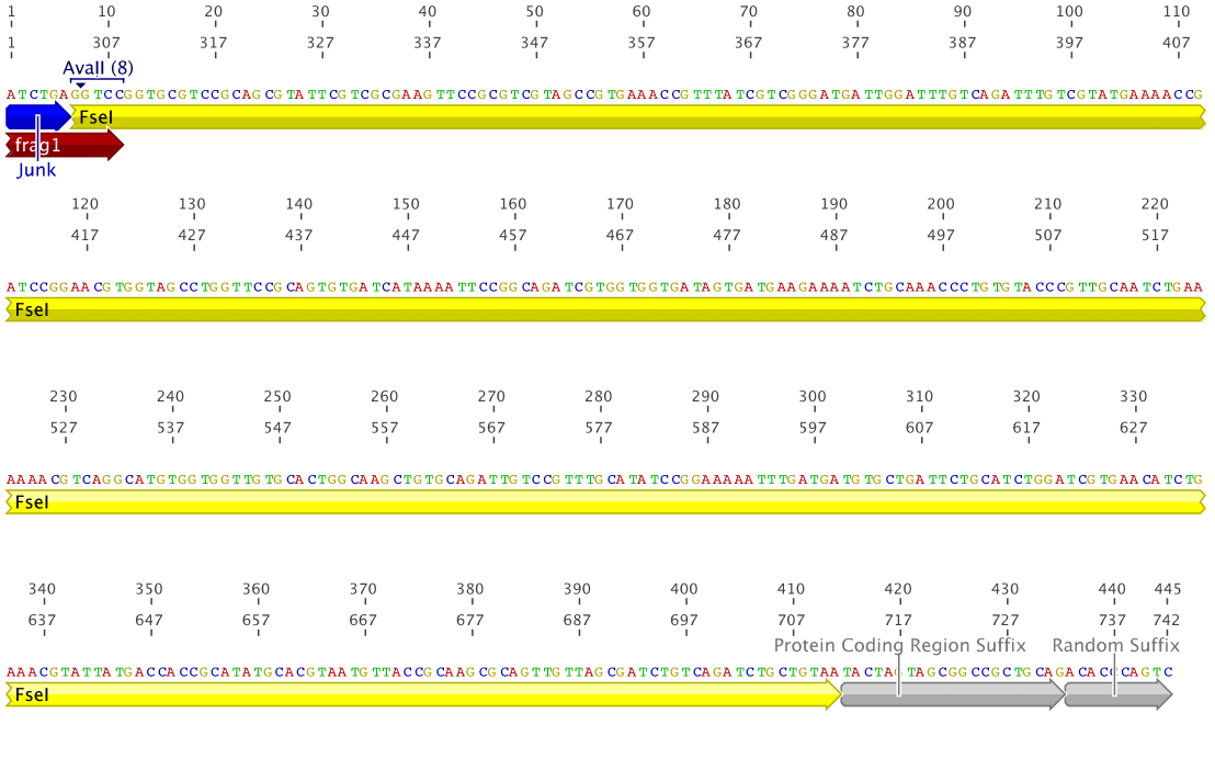 Figure 3: RBS_FseI fragment 2