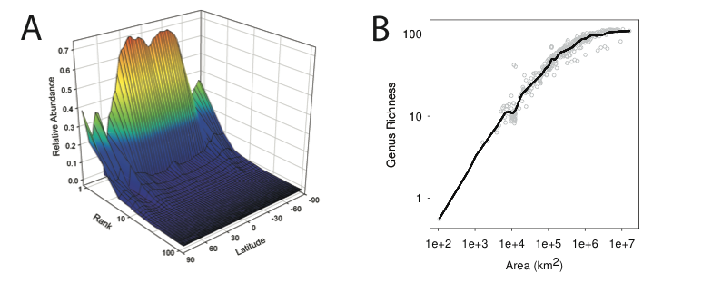 Patterns of biodiversity. (A) Rank-abundance curves along a transect at 165◦W indicate that in the tropical Pacific, the dominant genera have relative abundances close to twice those of their counterparts in the high latitudes. (B) Genus-area relationships are relatively steep at the sampling depth considered here, suggesting high rates of endemism amongst the analyzed genera.
