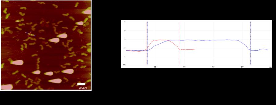 Fig. 1A AFM image 1