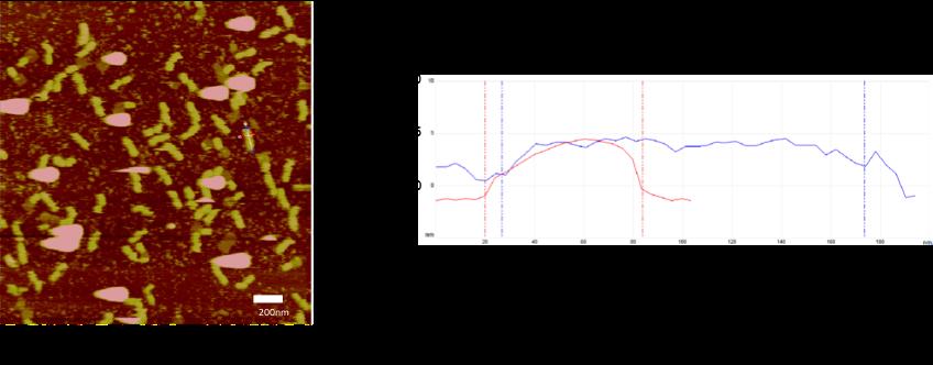 Figure3. AFM image2