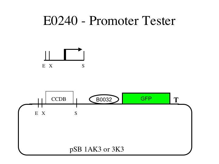 File:E0240.1.jpg