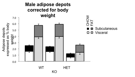 File:Male adipose subcut and visc.jpg
