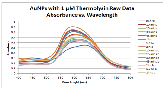 Raw Data AuNPs with 1 uM Thermolysin Absorbance vs. Wavelength.PNG