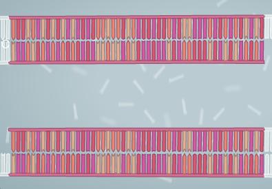 ReplicatedDNA112493.png