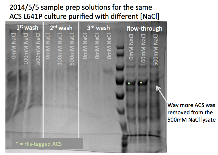 File:140516 SDS-PAGE vary NaCl.png