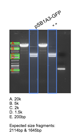 File:2015-04-07 pTet-EsaI-GFP pSB1A3 gel annotated v2.png