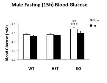 File:Male 15h fasting BG.jpg