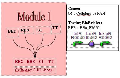 File:M1 cloning strategy.jpg