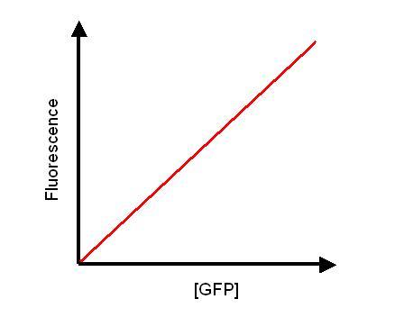 File:Fluorescence Calibration Curve.JPG