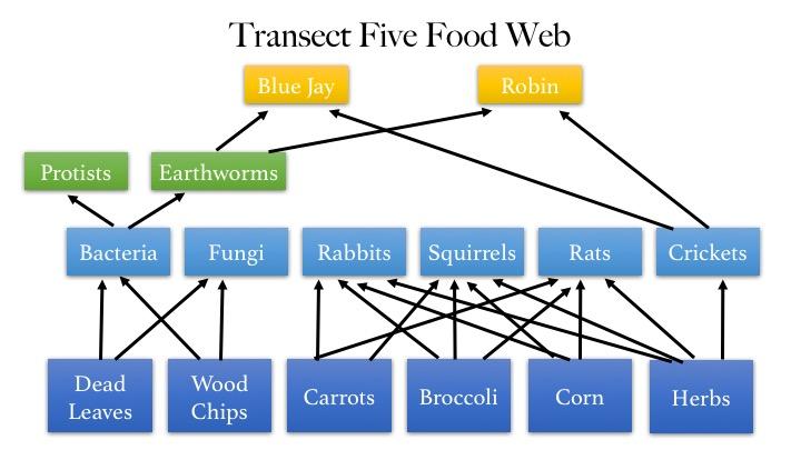 File:Food Web12.jpg