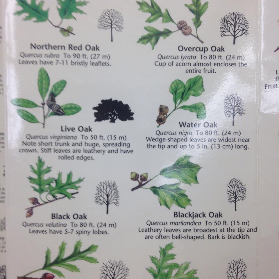 PlantKey.jpg