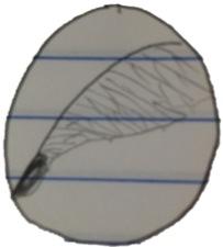 Drawing of sample 5.jpg