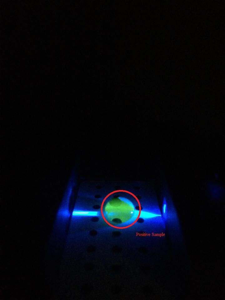 PCR DNA 4-1 labels.jpg