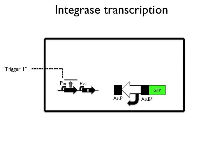 File:Translation.jpg