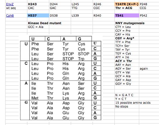 Mutagenesis KP 2012.png