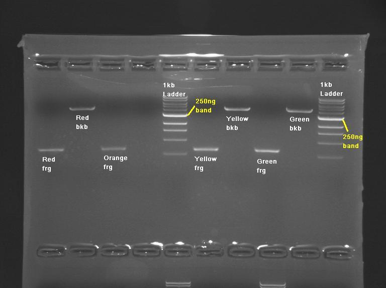 Talk:20.109(F10): Mod 1 Day 3 Agarose gel electrophoresis ...