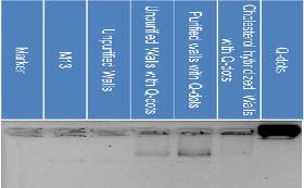 File:Fig.1-2-6. Agarose gel electrophoresis showing the existence of DNA.png
