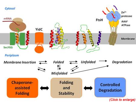 Protein Misfolding.jpg