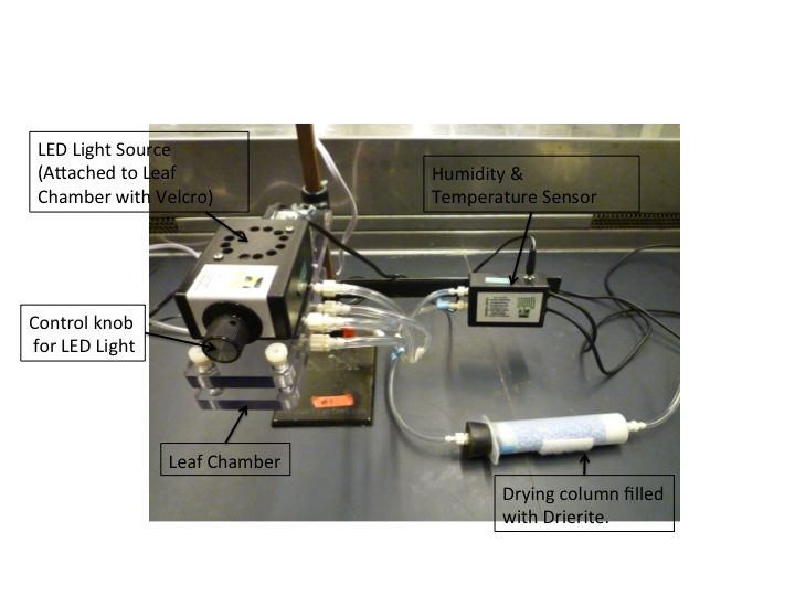 Qubit Photosynthesis Slide 4.jpg