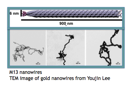 Au nanowires credit.png