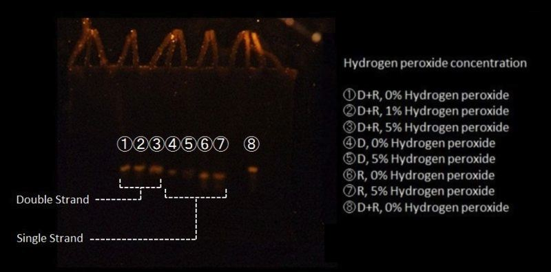File:H2O2.jpg